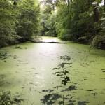 Urwald-Fluss