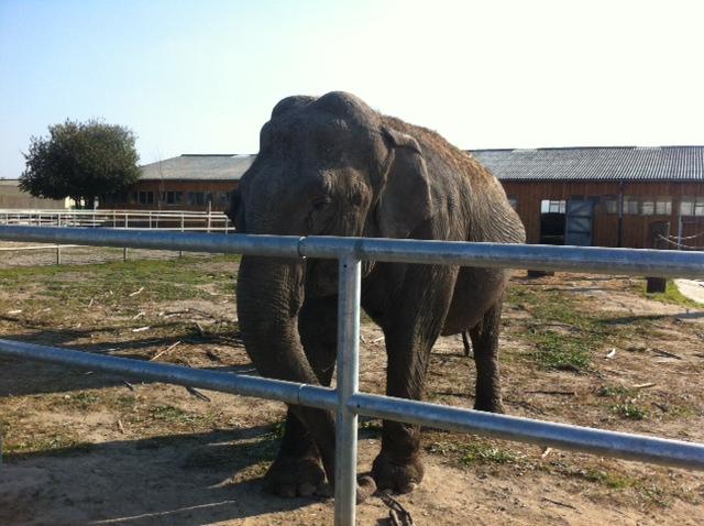 Elefant im Tierpark Waltersdorf