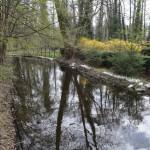 Fredersdorfer Mühlenfliess im Spreewaldpark von Schöneiche