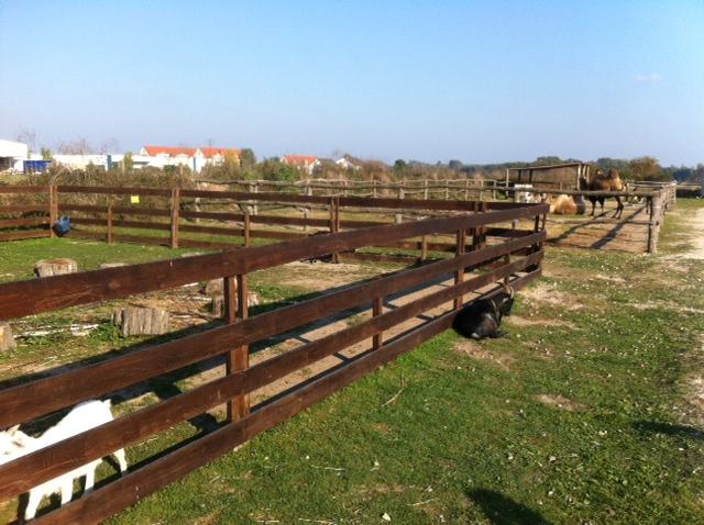 Streichelzoo im Tierpark Waltersdorf